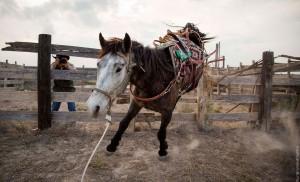 Unbranded-Film-Mustang-Pferd-EOFT