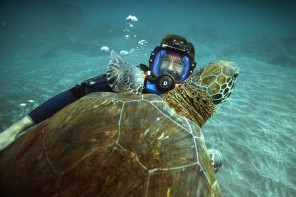 Living-Planet-Tour-Dirk-Steffens-Turtle